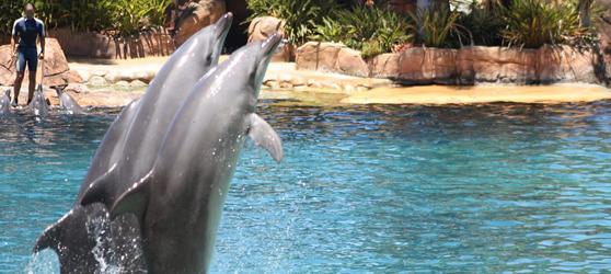 Cayo Ensenachos Dolphin Show